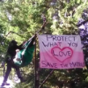 Save the Mattole Ancient Forest